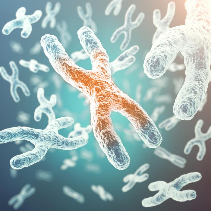 Der Jungbrunnen in unserem Genom - Telomere - Der Schlüssel für ein langes Leben