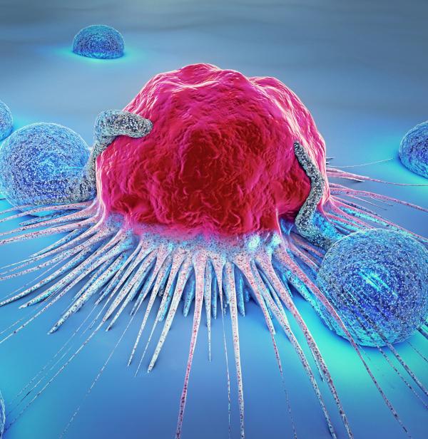 Ein riskanter Trend - Telomere - Der Schlüssel für ein langes Leben
