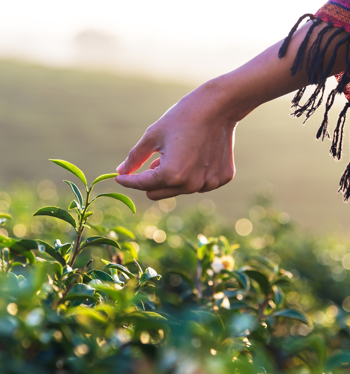 Begegnung mit Heilpflanzen - Heilpflanzen - die Chance für eine bessere Gesundheit